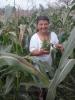 Kukoricarica